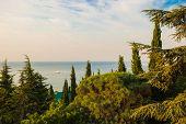 Crimean morning