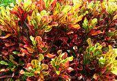 Colorfulplant