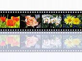 Flower Impressions