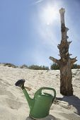 Watering can by dead tree on sandy beach