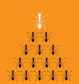 Vector Image Of An Ants On Orange Background.