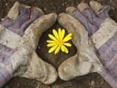 Gardening Gloves With Yellow Flower