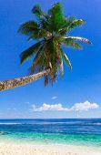 Sea Palm Dream
