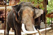 Elephant With Frame