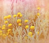 image of clos  - Yellow flowers in garden  - JPG