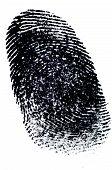stock photo of dna fingerprinting  - Black Ink Fingerprints on White Paper - JPG