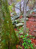 Whiteoak Canyon Trail Virginia