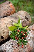 lingonberry sprigs