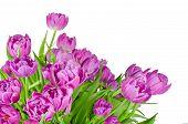 Bouquet Of Pink Tulips In Flowerpot Isolated On White