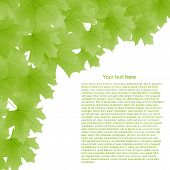 Spring Background With Green Leaves And Place For Text