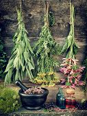 stock photo of tansy  - healing herbs herbal medicine retro stylized photo - JPG