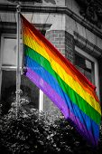 foto of gay flag  - Rainbow Flag with a Black and White Background - JPG