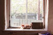 Kitten on the windowsill