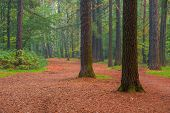 Beautiful Tall Trees In Summer Forest Morning