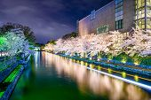 Kyoto, Japan at the cherry blossom lined Okazaki Canal in the spring season.