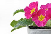 Floral Freshness
