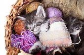 sleeps kitten and heart pillow