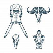 Animal Scull Set Elephant Buffalo Ostrich Lion