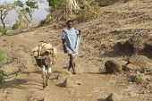 Man walks by countryside path in Bahir Dar, Ethiopia.