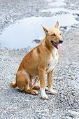 image of stray dog  - Close up dirty stray dog sitting on bumpy road with water - JPG