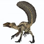 picture of carnivores  - Deinonychus was a carnivorous theropod that lived in the Cretaceous Period of North America - JPG