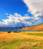 Amazing day on the lake Laguna Azul. Herd of mustangs grazing in the meadow. On the horizon, towering cliffs Torres del Paine