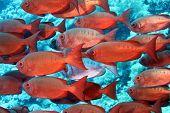 stock photo of mm  - Her ses en serie billeder fra dykning - JPG