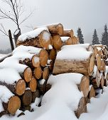 picture of firewood  - Firewood under the snow in winter mountains - JPG