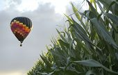 Balloon Corn Landscape