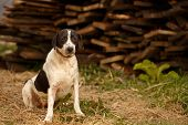 stock photo of pity  - Black and White Pity Dog Sits on Manger - JPG