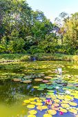 stock photo of rainforest  - Little pond in tropical rainforest with lotus flowers - JPG