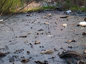 foto of sewage  - Lake polluted with garbage sewage and oil - JPG