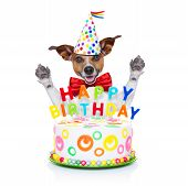 stock photo of birthday hat  - jack russell dog as a surprise behind happy birthday cake with candles wearing red tie and party hat isolated on white background - JPG