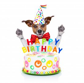 foto of birthday hat  - jack russell dog as a surprise behind happy birthday cake with candles wearing red tie and party hat isolated on white background - JPG