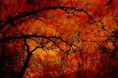 Autumn Burn