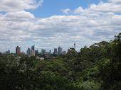 Sydney From Bellevue Hill