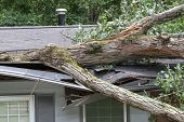 stock photo of storms  - House roof crushed by a white oak tree during a storm - JPG