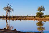 Kruger National Park, Reflections On Lake poster