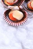 stock photo of scallop shell  - Raw queen scallops  - JPG
