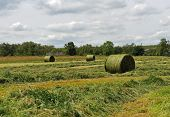 image of crips  - The harvest time grass baled for hay - JPG