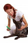 Veterinário dando cão desparasitação