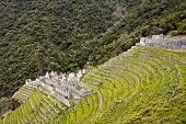 Winay Wayna Terraces