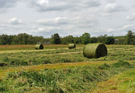 stock photo of crip  - The harvest time grass baled for hay - JPG