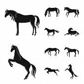 Isolated Object Of Fauna And Mare Icon. Set Of Fauna And Stallion Vector Icon For Stock. poster