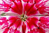 Flor colorida e bonita nos jardins