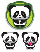 picture of pandas  - three cute pandas isolated