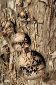 Christmas ball ornaments of surreal bark pattern, superimposed on a peeling tree trunk background
