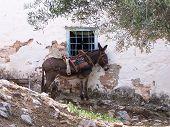 Tethered Donkey