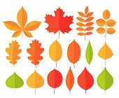 Autumn Leaf Leaves. Vector. Fall Leaves Maple, Chestnut, Oak. Set Leaves From Different Kind Of Tree poster