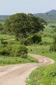 Tarangire Road